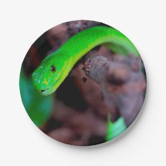 Prato De Papel Cobra do pitão