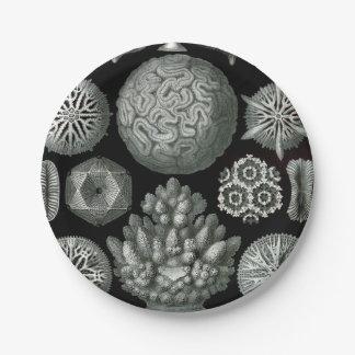 Prato De Papel Coral de Ernst Haeckel Hexacorallia