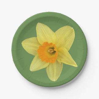 Prato De Papel Daffodil amarelo do primavera