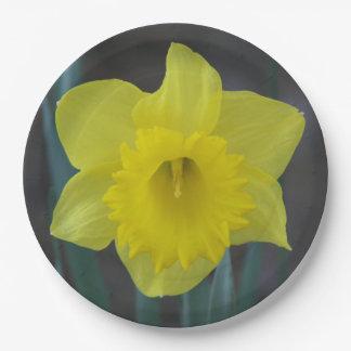 Prato De Papel Daffodil, placas de papel