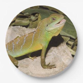 Prato De Papel Dragão de água chinês para amantes do lagarto