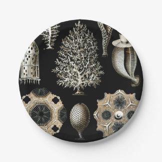 Prato De Papel Ernst Haeckel Calcispongiae