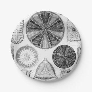 Prato De Papel Ernst Haeckel Diatomea