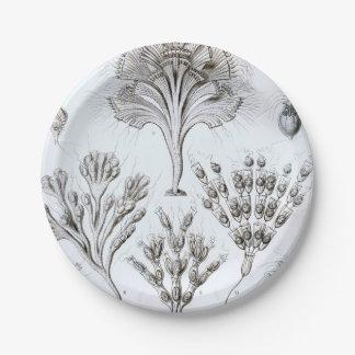 Prato De Papel Ernst Haeckel Flagellata