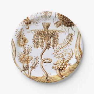 Prato De Papel Ernst Haeckel Tubulariae