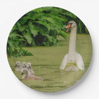 Prato De Papel Família da cisne