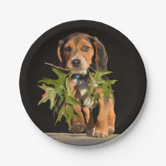 Prato De Papel Filhote de cachorro brincalhão do lebreiro com