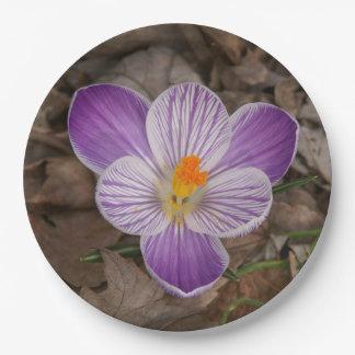 Prato De Papel Flor, placas de papel