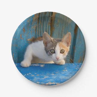 Prato De Papel Foto curiosa engraçada dos olhos do gatinho bonito