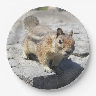 Prato De Papel Foto do esquilo à terra