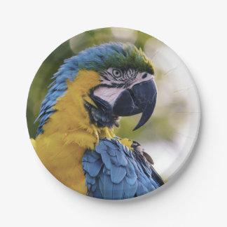 Prato De Papel Fotografia do retrato do perfil do papagaio