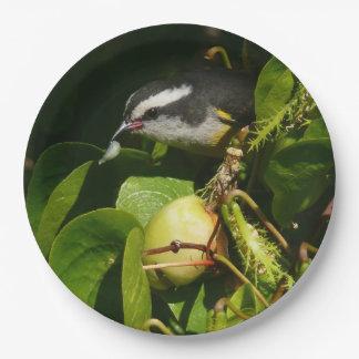 Prato De Papel Fotografia tropical da natureza comer do pássaro