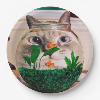 Prato De Papel Gato e peixes - gato - gatos engraçados - gato