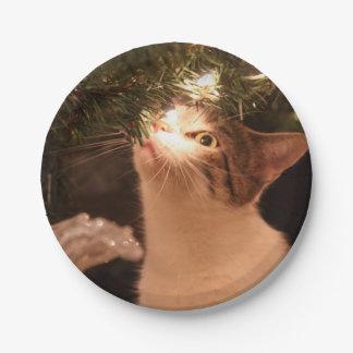 Prato De Papel Gatos e luzes - gato do Natal - árvore de Natal