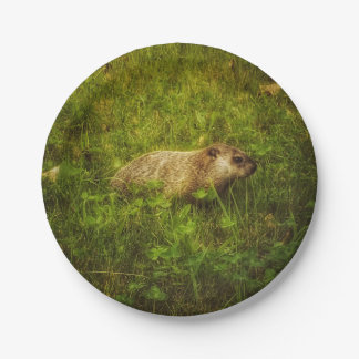 Prato De Papel Groundhog em placas de um campo