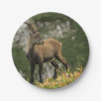 Prato De Papel Íbex selvagem alpino, da cabra, ou steinbock