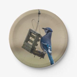 Prato De Papel Jay azul de balanço