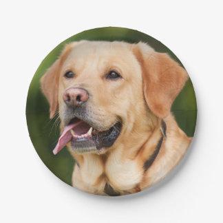 Prato De Papel Labrador dourado lindo