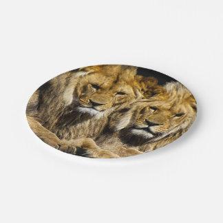 Prato De Papel Leões predadores perigosos