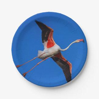 Prato De Papel Maior flamingo, roseus do phoenicopterus