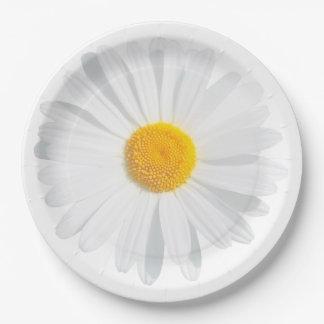 Prato De Papel margarida branca