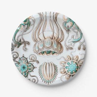 Prato De Papel Medusa de Ernst Haeckel Narcomedusae!