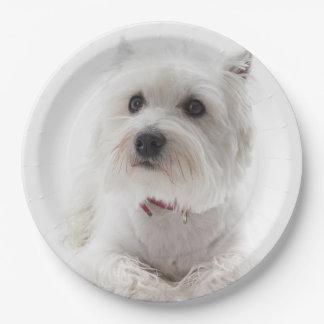 Prato De Papel Montanhas ocidentais brancas adoráveis Terrier