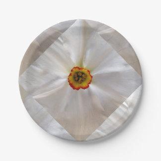 Prato De Papel narciso do branco da pérola