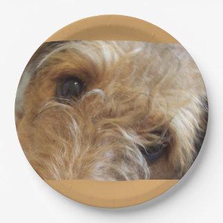 Prato De Papel olhos do terrier do airedale