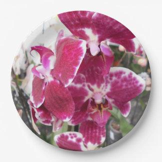 Prato De Papel Orquídea roxa