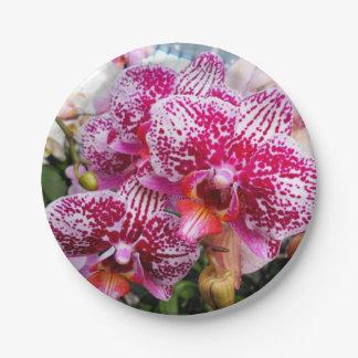 Prato De Papel Orquídeas cor-de-rosa do Dendrobium