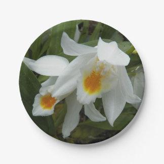Prato De Papel Orquídeas de Coelogyne florais