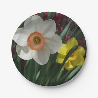 Prato De Papel Pares de Daffodils