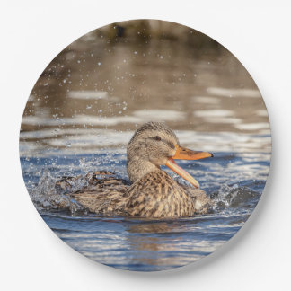 Prato De Papel Pato do pato selvagem no parque tragando