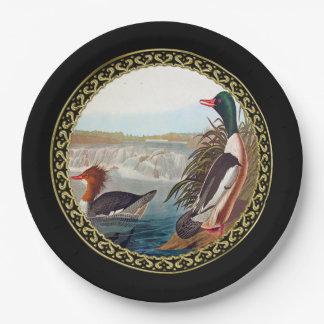 Prato De Papel Patos americanos do pato selvagem em uma natação