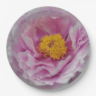 Prato De Papel Peônia cor-de-rosa