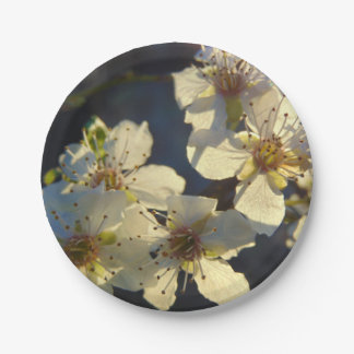 Prato De Papel Placa de papel das flores de cerejeira