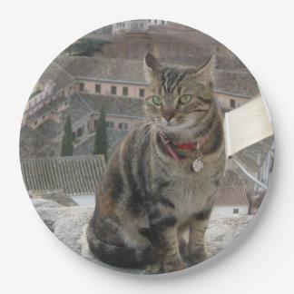 Prato De Papel Placa de papel eyed verde da fotografia do gato