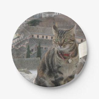 Prato De Papel Placas de papel da foto do gato