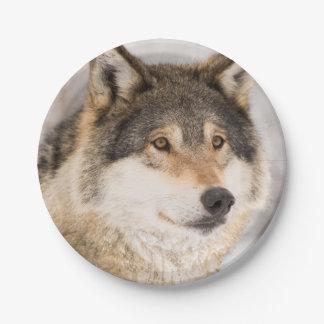 Prato De Papel Placas de papel de sorriso do lobo amigável