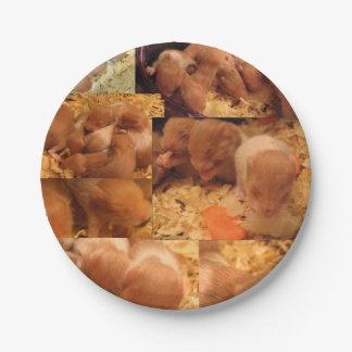 Prato De Papel Placas de papel do piquenique do partido do bebê