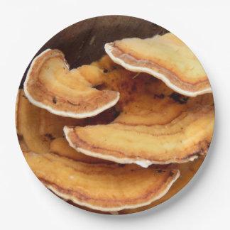 Prato De Papel Placas de papel dos fungos de Stereum Hirsutum