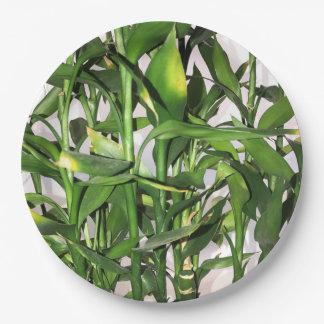 Prato De Papel Planta da casa do folha do verde e os de bambu dos