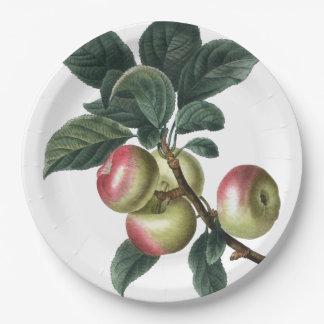 Prato De Papel Ramo de maçãs vermelhas