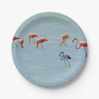 Prato De Papel Rebanho cinzento e cor-de-rosa dos flamingos no