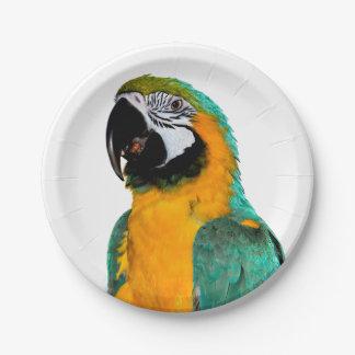 Prato De Papel retrato colorido do pássaro do papagaio do macaw