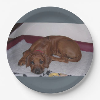 Prato De Papel Rhodesian_Ridgeback_puppy