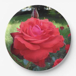 Prato De Papel Rosas vermelhas lindos