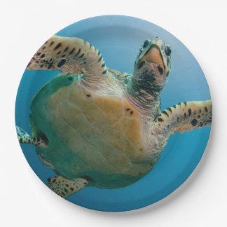 Prato De Papel Tartaruga impressionante do mar