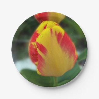 Prato De Papel tulipas vermelhas amarelas